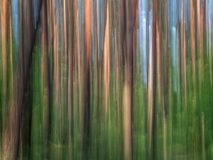 Forest, ICM.